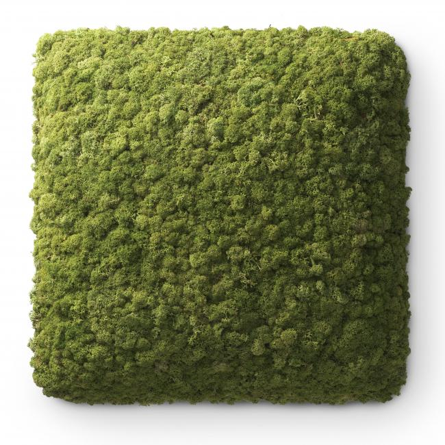Nordgröna Reindeer Moss CONVEX certified by acousticfacts.com